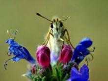 Rainer Clemens Merk | Butterfly on Flower Photography Prints by artist Rainer Clemens Merk | Photo Prints On Canvas, Paper | ArtZolo.com