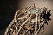 Rainer Clemens Merk | Camouflage - Spider Photography Prints by artist Rainer Clemens Merk | Photo Prints On Canvas, Paper | ArtZolo.com