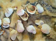 Shagufta Mehdi | Watercolor Painting title Shells on Paper | Artist Shagufta Mehdi Gallery | ArtZolo.com