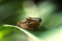 green, animal, frog, nature, wildlife, amphibian, cute, toad, isolated, cartoon, wild, vector, funny, character, jump, illustration, tropical, adorable, be