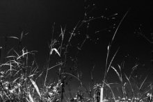 arid, autumn, background, bog, bulrush, bw, cane, country, countryside, dry, foliage, forest, grass, lake, landscape, leaf, meadow, nature, nobody, outdoor