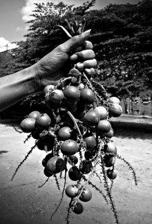 Matoa fruit especially from papua | Photography by artist Rahmat Nugroho | Art print on Canvas