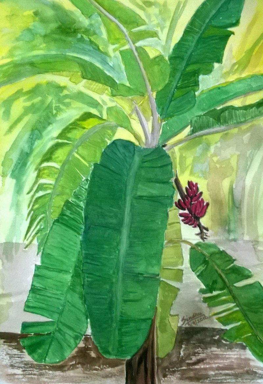 The Banana Tree By Artist Sindhulina Chandrasingh Nature