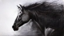 Animals Charcoal Art Drawing title 'Horse Charcoal' by artist Sundeep Kumar