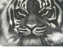 Animals Charcoal Art Painting title Tiger by artist Preeti Ghule