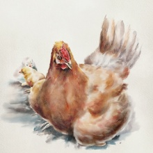 Other Watercolor Art Painting title 'Hen' by artist Kaukab Ahmad