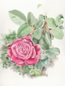 Kaukab Ahmad | Watercolor Painting title Rose1 on Paper | Artist Kaukab Ahmad Gallery | ArtZolo.com