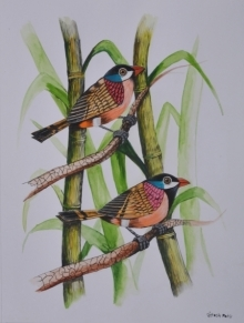 Santosh Patil | Postercolor Painting title Birds painting 60 on Paper | Artist Santosh Patil Gallery | ArtZolo.com