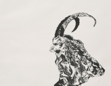 art, printmaking, paper, etching, animal