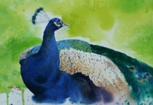Animals Watercolor Art Painting title 'Peacock 1' by artist Rupesh Sonar