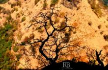 Rohit Belsare | Shadowed Tree Photography Prints by artist Rohit Belsare | Photo Prints On Canvas, Paper | ArtZolo.com