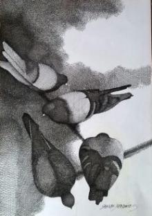 Figurative Pen-ink Art Drawing title Pigeons by artist SHANKAR KENDALE