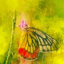 art, digital painting, canvas, animal